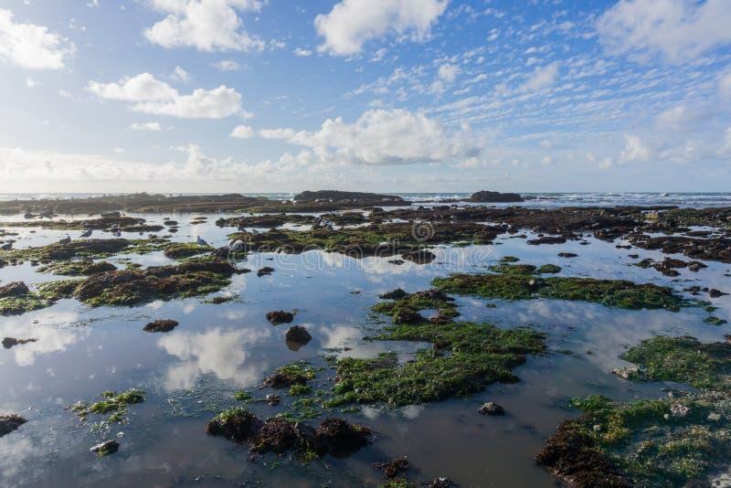 Vreedzaam Oceaan kustlandschap at low tide, Fitzgerald Marine Reserve, Moss Beach, Californië royalty-vrije stock afbeeldingen