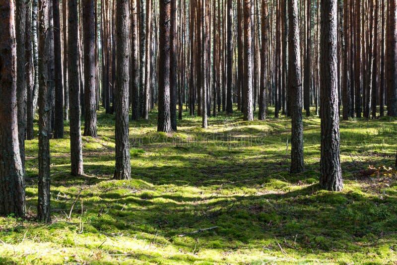 Vreedzame dag in de lente groen bos stock afbeelding