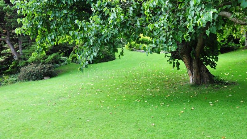 Vreedzame Groene Tuin royalty-vrije stock foto