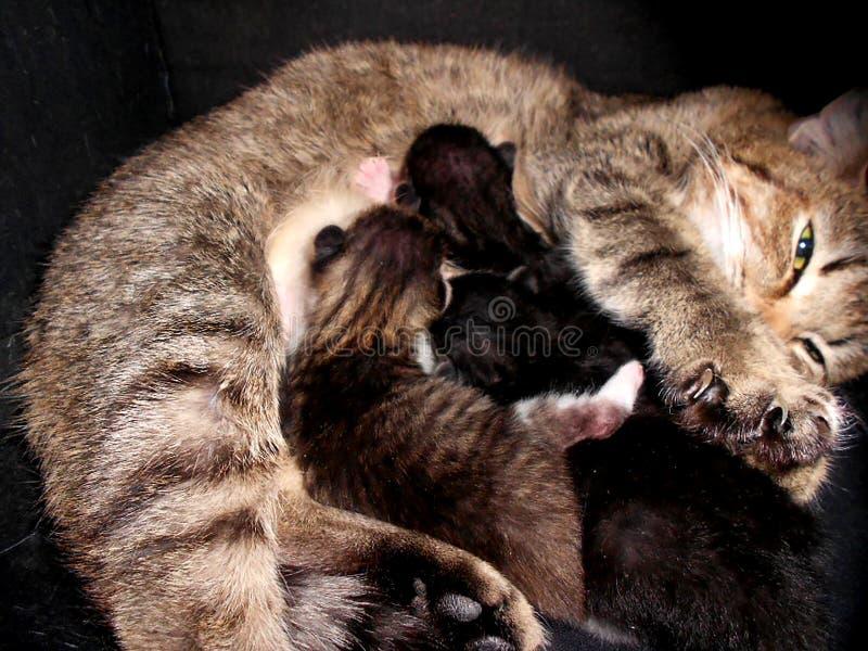 Vreedzame kat voedend hun katten stock afbeeldingen