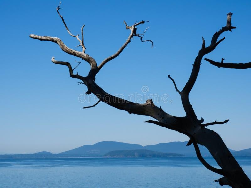 Vreedzame kustlijn in de staat van Washington, de V.S. royalty-vrije stock foto's