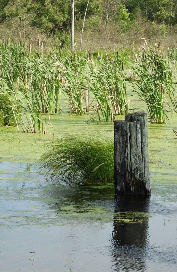 Vreedzame scène van de massa en het logboek van het moerasgras stock afbeelding