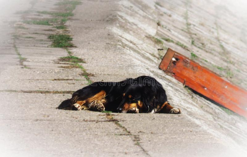 Vreedzame verlaten hondslaap op de straat stock foto's