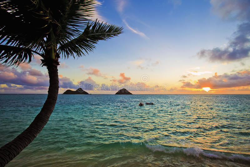 Vreedzame zonsopgang met palm royalty-vrije stock afbeeldingen