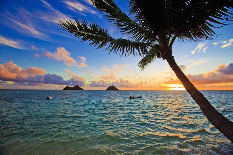 Vreedzame zonsopgang met palm royalty-vrije stock fotografie