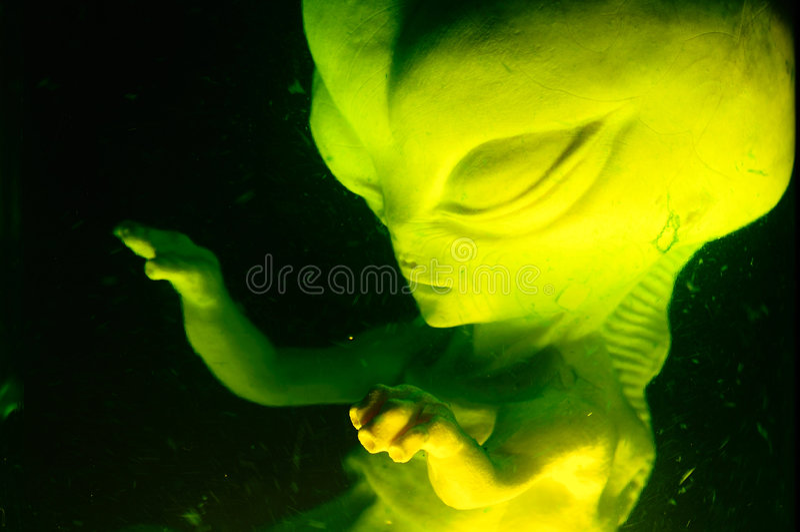 Vreemd Foetus stock foto