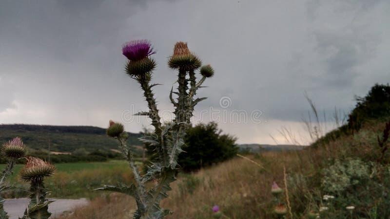 Vreemde bloem stock fotografie