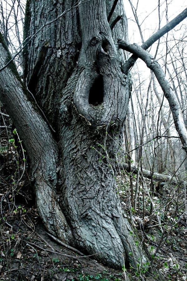 Vreemde boom stock afbeeldingen