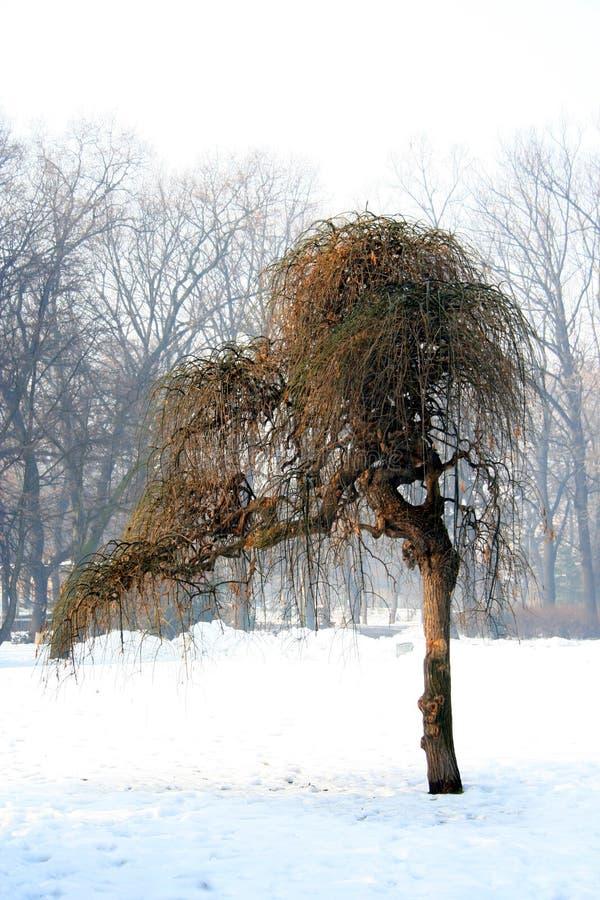 Vreemde boom stock afbeelding