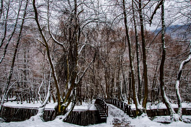 Vrelo Bosne auf Winter stockfoto