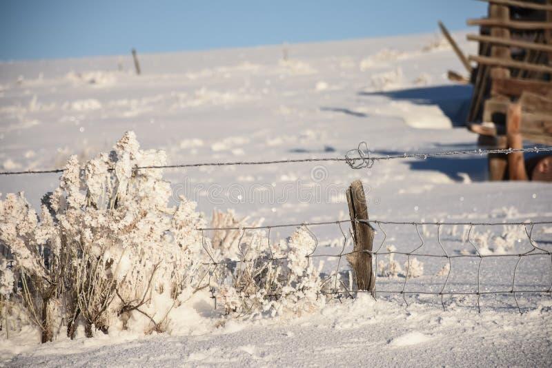 Vriden tråd vid Rabbitbrush i vinter arkivbilder