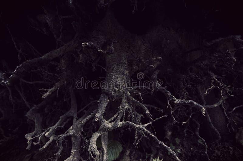Vridet mörker rotar i läskig skog arkivbilder