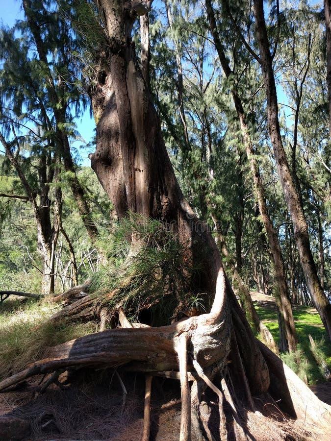 Vridning av trädet royaltyfria foton