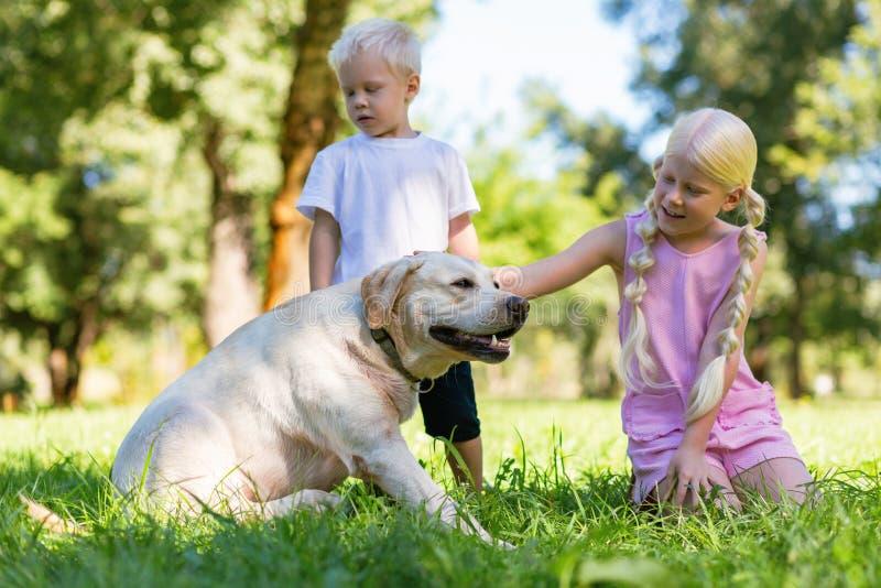 Vriendelijke kinderen die tijd met een hond in het park doorbrengen stock fotografie