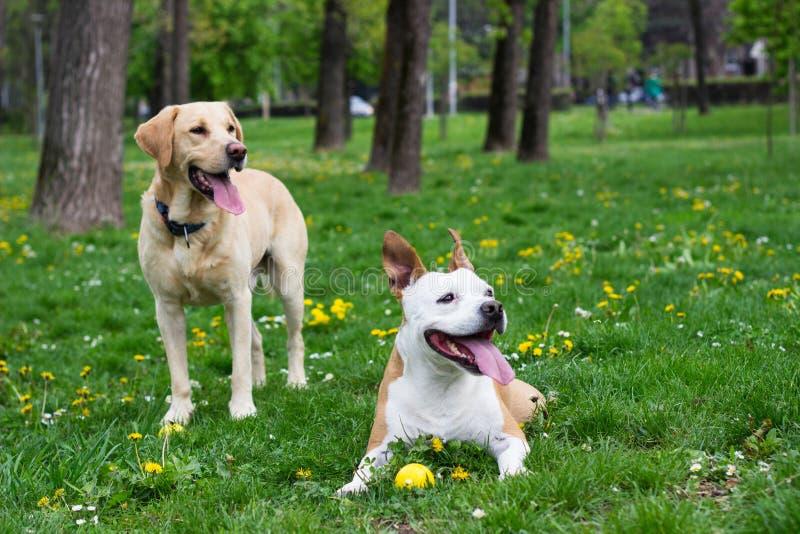 Vrienden van de de lente de gelukkige hond royalty-vrije stock afbeelding