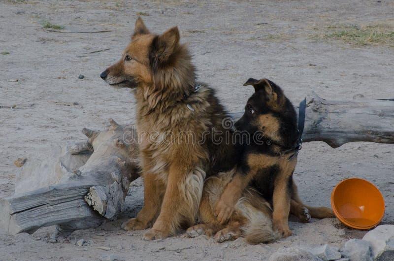 Vriendenhonden stock afbeeldingen