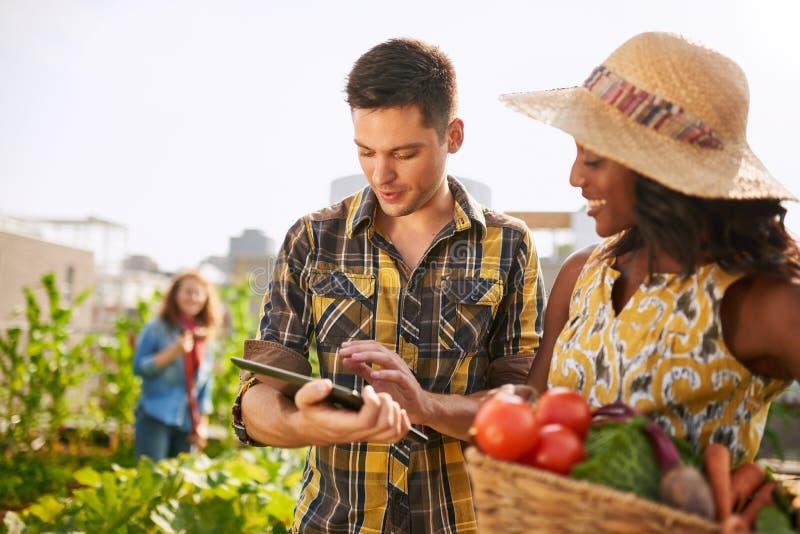 Vriendschappelijk team die verse groenten van de tuin van de dakserre oogsten en oogstseizoen op digitaal plannen royalty-vrije stock foto's
