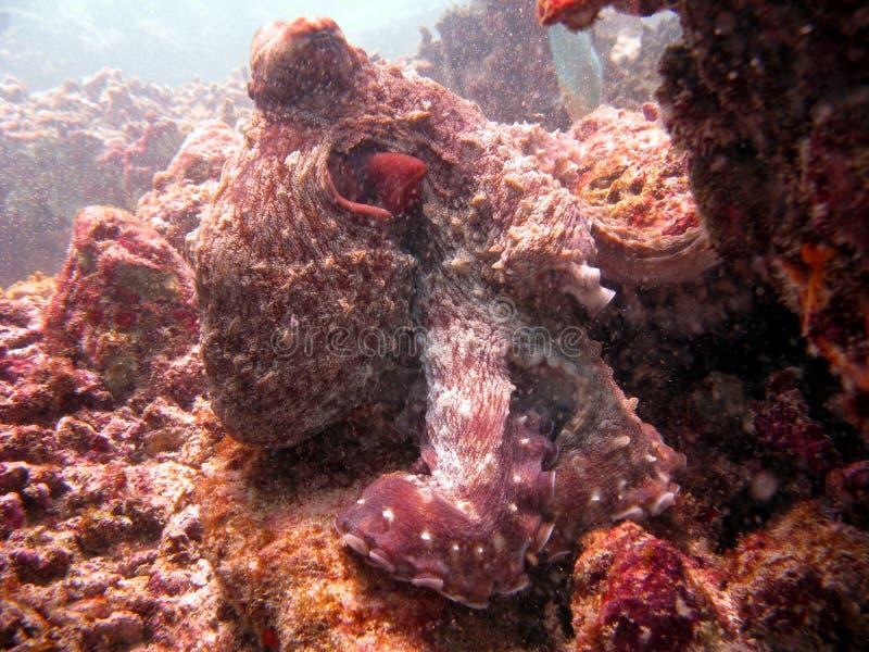 Vriendschappelijke Octopus stock foto's