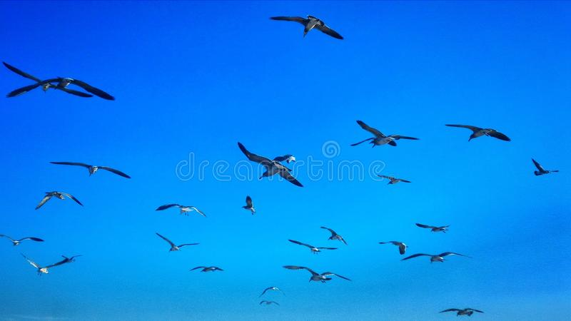 Vriendschappelijke Vogels stock fotografie
