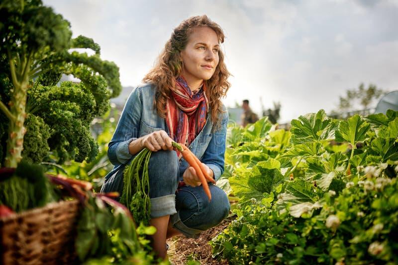 Vriendschappelijke vrouw die verse groenten van de tuin van de dakserre oogsten royalty-vrije stock fotografie