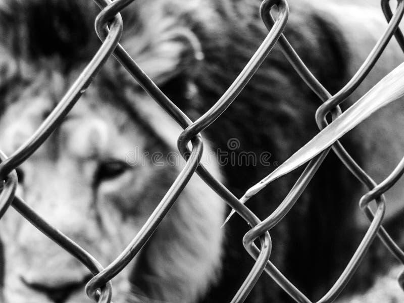 Vrij de dieren royalty-vrije stock foto's