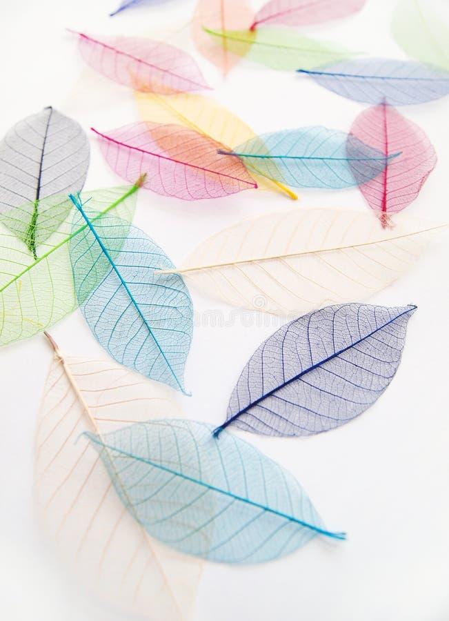 Vrij droge kleurrijke bladeren stock fotografie