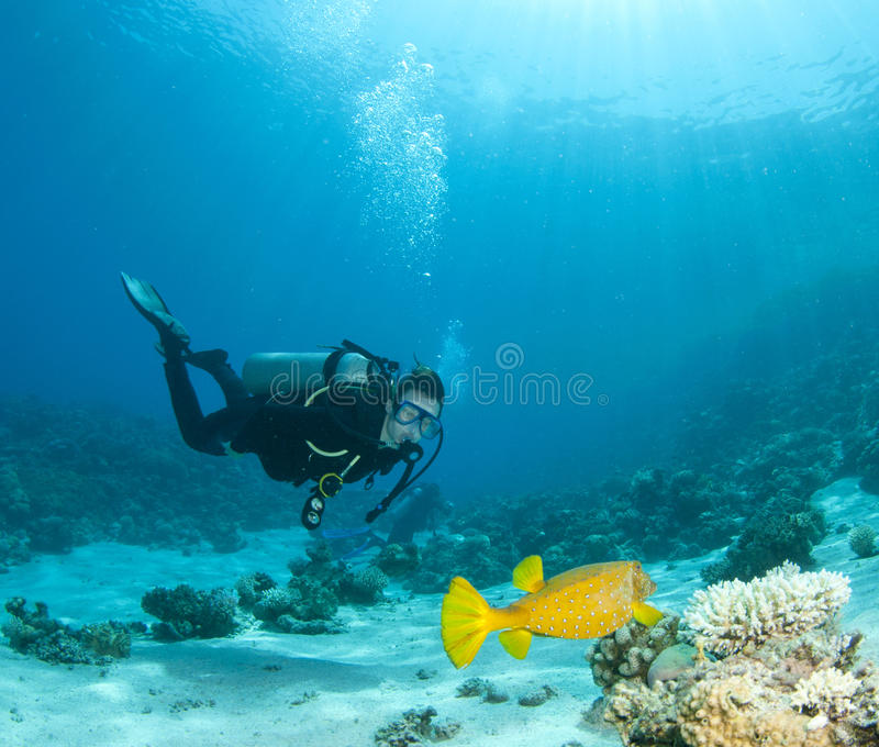 Vrij duiken in duidelijk blauw water royalty-vrije stock afbeelding