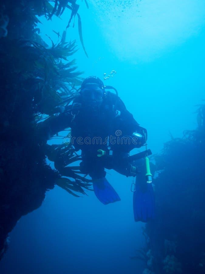 Vrij duiken in Ierland stock foto's