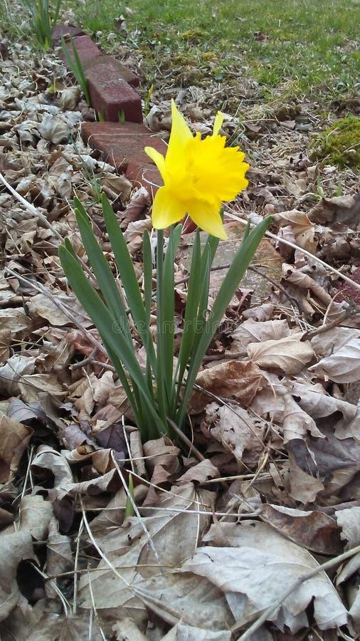 Vrij gele bloem van bloembed stock afbeelding