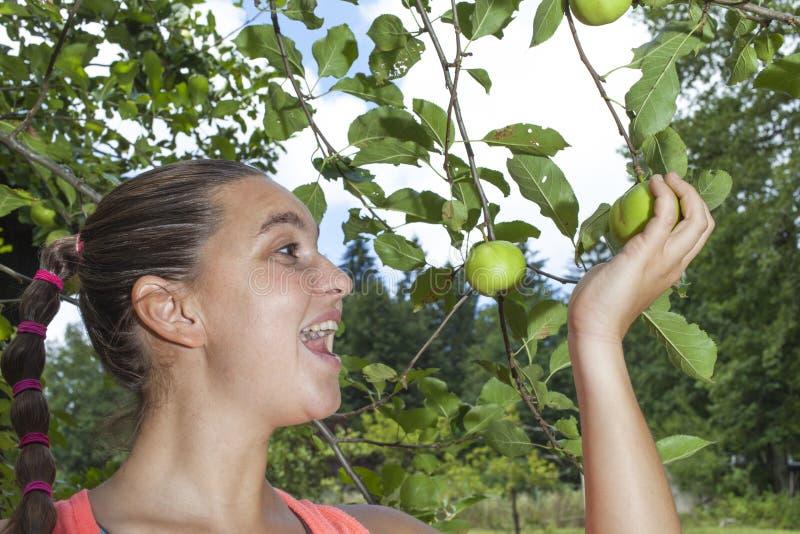 Vrij glimlachende jonge vrouw die groene organische appelen plukken stock foto