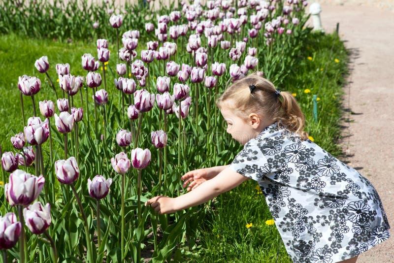 Vrij klein meisje wat betreft het kweken van tulpen royalty-vrije stock foto