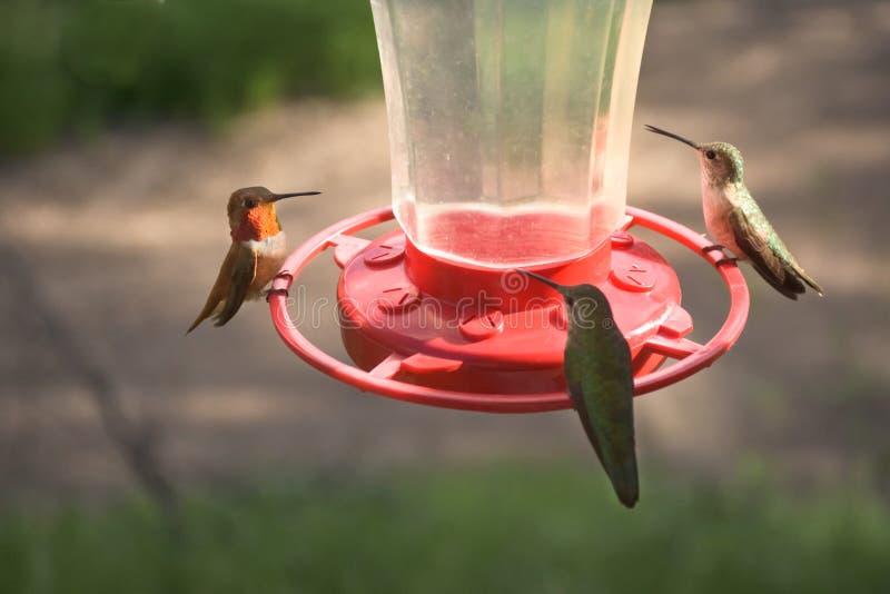 Vrij Kleine Kleurrijke Kolibries die bij Voeder voeden stock fotografie