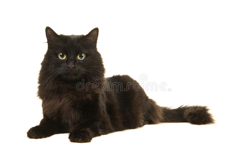 Vrij langharige zwarte kat die op de vloer liggen die de camera onder ogen zien stock foto