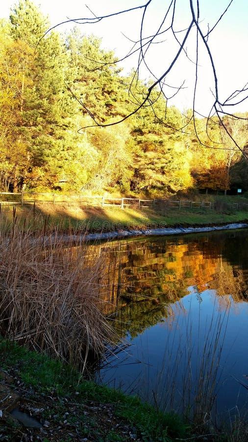 Vrij meer en zonnig bos stock foto