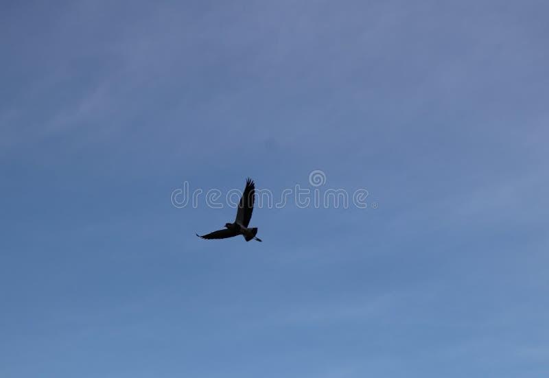 vrij om in de blauwe hemel te vliegen royalty-vrije stock foto's