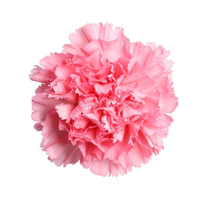 Vrij in roze stock afbeeldingen