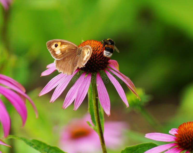 Vrij roze bloem met een bij en een vlinder stock afbeelding