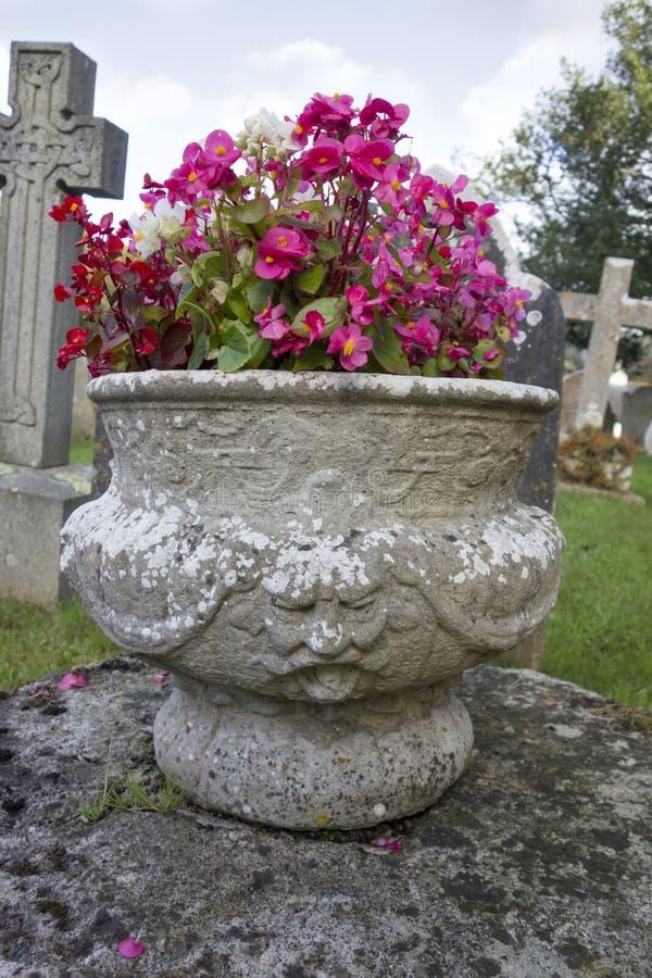 Vrij roze bloemen in een Engels kerkhof stock foto's