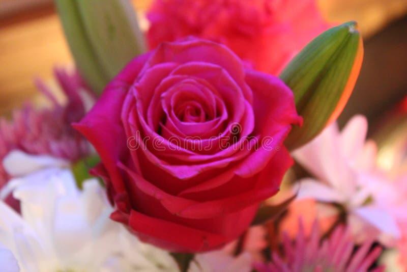Vrij Roze nam toe royalty-vrije stock foto