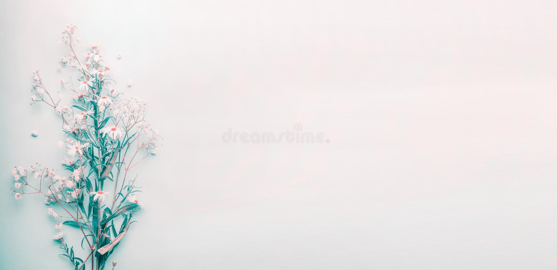 Vrij wilde madeliefjesbloemen op blauwe pastelkleurachtergrond, hoogste mening stock foto's