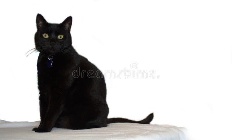 Vrij Zwarte Cat Poses voor de Camera stock fotografie