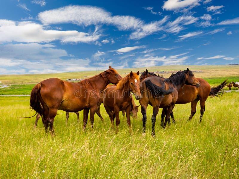 Vrije paarden in de steppe royalty-vrije stock fotografie