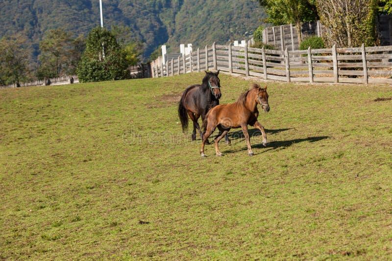 Vrije paarden in de weide stock fotografie