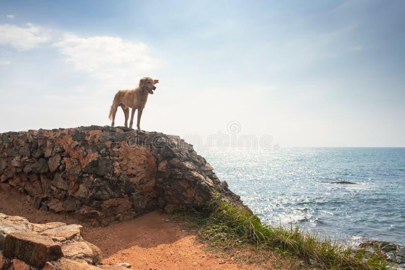 Vrijheidshond Hondverblijf op rots en het hebben van pret op oceaan, overzees royalty-vrije stock foto
