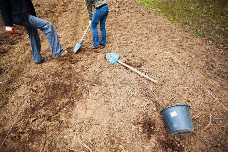 Vrijwilligers die bomen planten royalty-vrije stock afbeeldingen