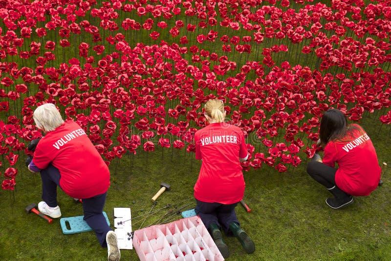 Vrijwilligers die met papavers dichtbij Toren van Londen werken stock fotografie