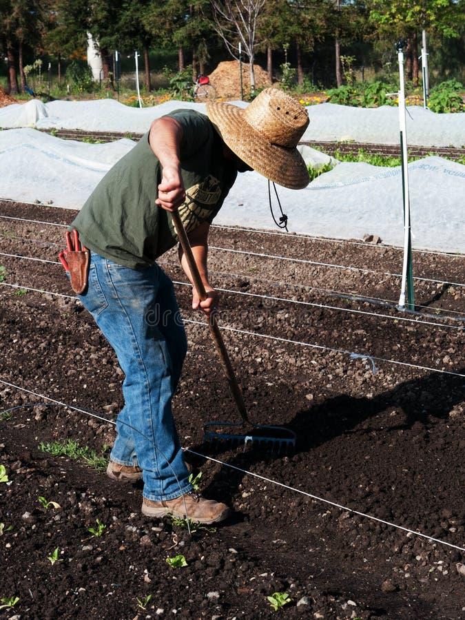 Vrijwilligers het voorbereidingen treffen grond bij communautair landbouwbedrijf stock afbeeldingen