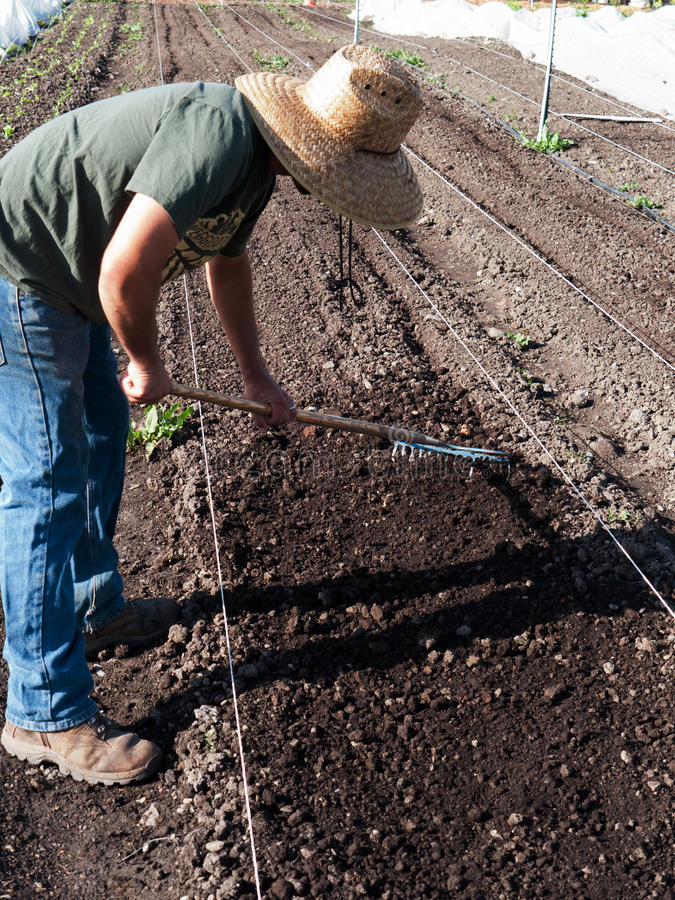 Vrijwilligers het voorbereidingen treffen grond bij communautair landbouwbedrijf stock fotografie