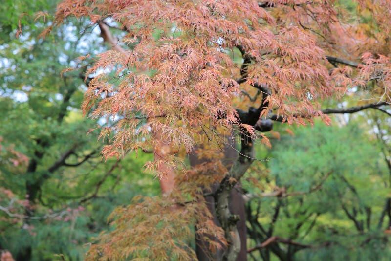 vroeg dalingsseizoen bij tuin van Tofukuji-Tempel royalty-vrije stock afbeelding