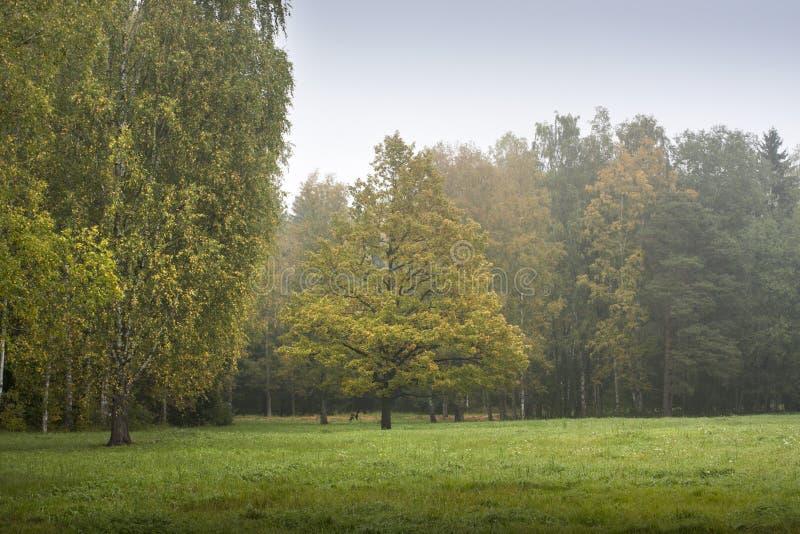 Vroeg de herfstbos stock afbeelding